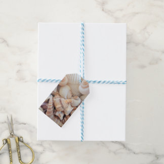 Sea Shells, Summer Exotic Tropical Photography Gift Tags