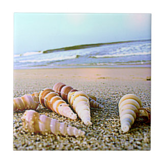 Sea Side Shells tile