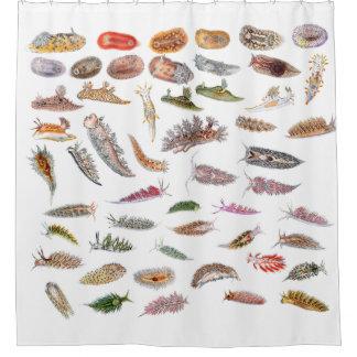 Sea slugs from Britain