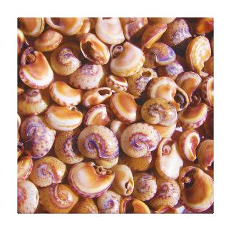 Sea Snail Shells Cyclops Nassa Cyclope Pellucidus Canvas Print