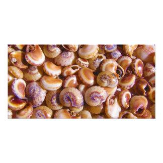 Sea Snail Shells Cyclops Nassa Cyclope Pellucidus Photo Card Template