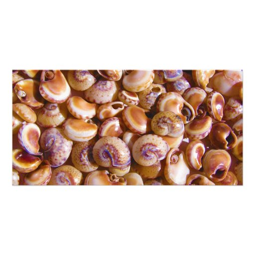 Sea Snail Shells Cyclops Nassa Cyclope Pellucidus Photo Card
