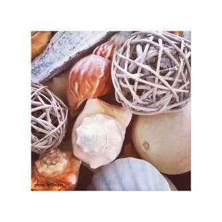 sea snails are shells gallery wrapped canvas
