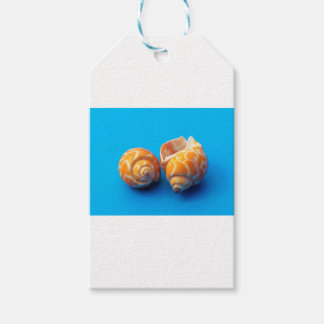 Sea Snails Gift Tags