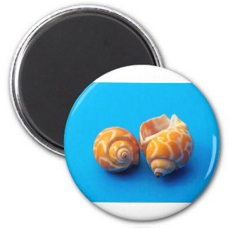 Sea Snails Magnet