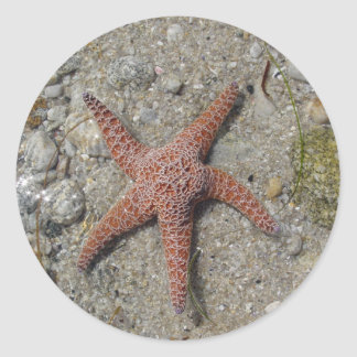 Sea Star Classic Round Sticker