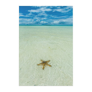 Sea star in shallow water, Palau Acrylic Wall Art