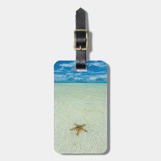 Sea star in shallow water, Palau Bag Tag