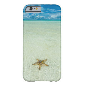 Sea star in shallow water, Palau Barely There iPhone 6 Case