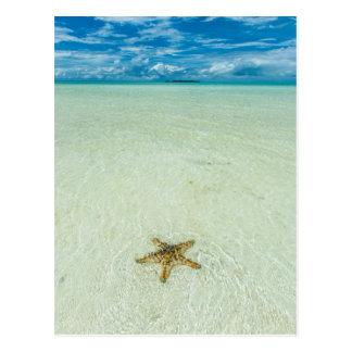 Sea star in shallow water, Palau Postcard