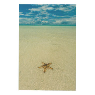 Sea star in shallow water, Palau Wood Wall Decor