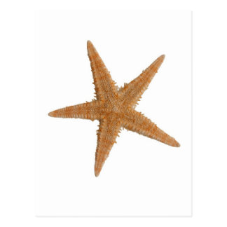 Sea star postcard