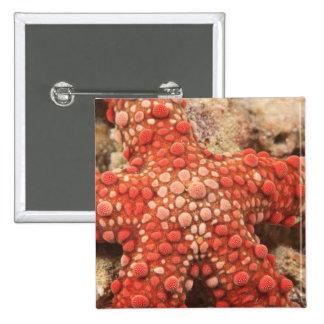 sea star, Scuba Diving at Tukang Besi/Wakatobi 2 Inch Square Button