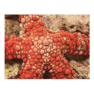 sea star, Scuba Diving at Tukang Besi/Wakatobi Postcard