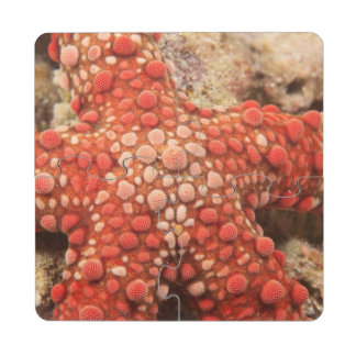 sea star, Scuba Diving at Tukang Besi/Wakatobi Puzzle Coaster