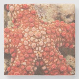 sea star, Scuba Diving at Tukang Besi/Wakatobi Stone Beverage Coaster