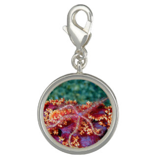 Sea star/ starfish bracelet charm