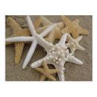 Sea Stars Postcard