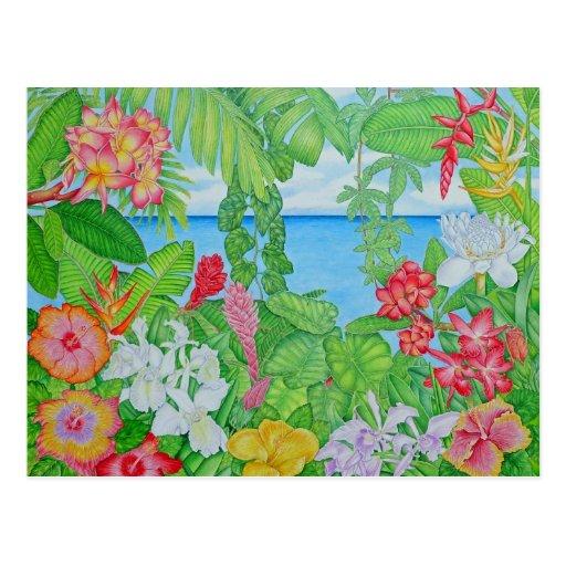 Sea through the Jungle Post Cards