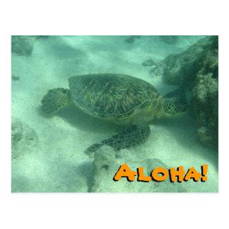 Sea Turtle Aloha from Hawaii Postcard