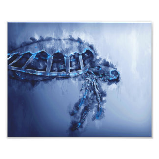 Sea Turtle Art - prints-Posters-Framed-Turtle-Art Photo Art