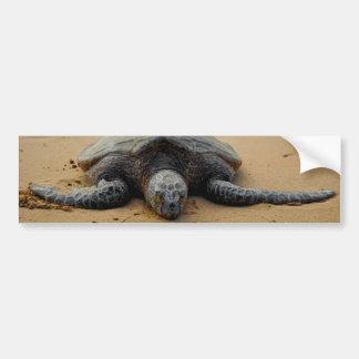 Sea Turtle Car Bumper Sticker