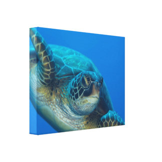 Sea Turtle Canvas Canvas Print