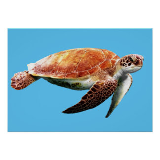 Sea Turtle Custom Color Background Poster