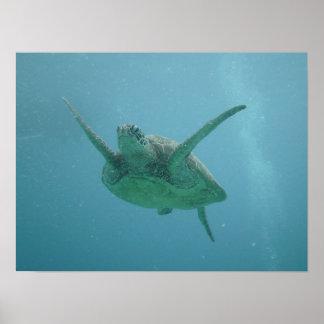 Sea Turtle in Natural Habitat Poster
