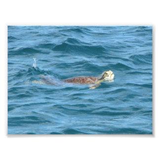 Sea Turtle Photo Print