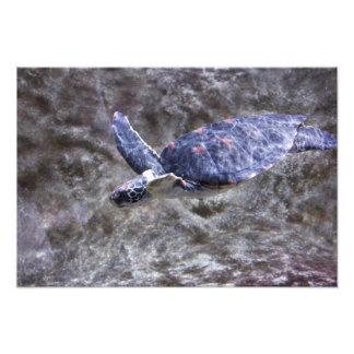 Sea Turtle Art Photo