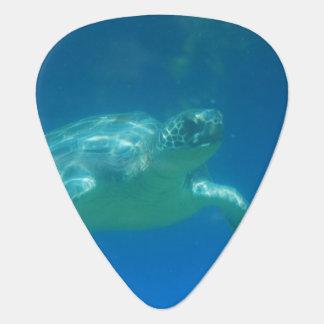 Sea Turtle Pick