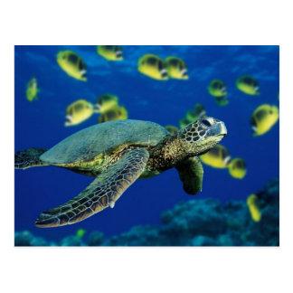 Sea Turtle Postcards