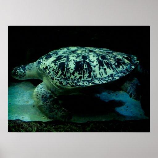 Sea Turtle Poster!