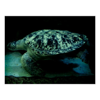 Sea Turtle Poster! Poster