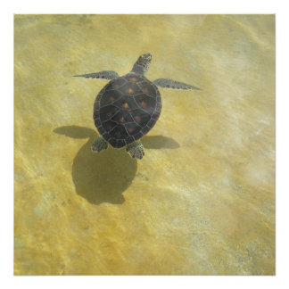 Sea Turtle Shadow Play Print