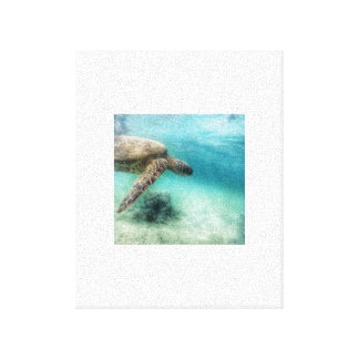 Sea turtle stretched canvas print