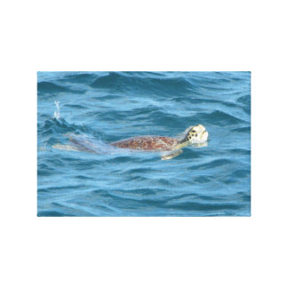 Sea Turtle Stretched Canvas Prints