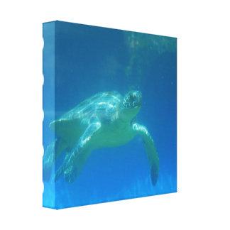 Sea Turtle Swim Canvas Print