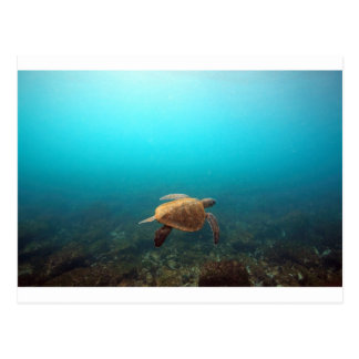 Sea turtle swimming underwater Galapagos paradise Postcard