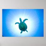 Sea turtle swimming underwater poster