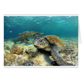 Sea turtle tranquility in underwater lagoon card