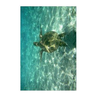 Sea Turtle Underwater Acrylic Print
