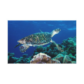 Sea Turtle Wrapped Canvas Stretched Canvas Print