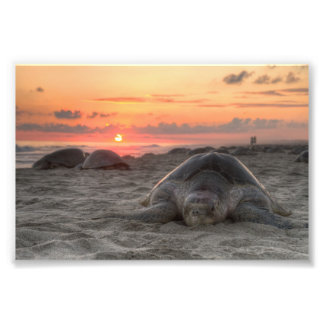 Sea Turtles at Sunset Photographic Print