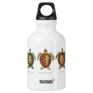 Sea Turtles of the World 2 Water Bottle