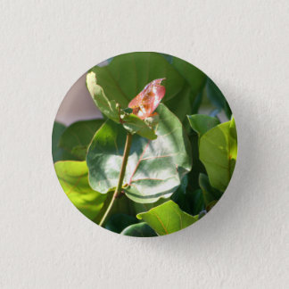 Seagrape Leaves pin