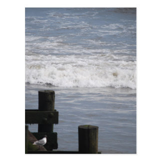 seagul at pier postcard