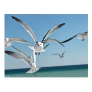 seagull 3 postcard