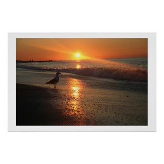 Seagull at Sunrise Poster